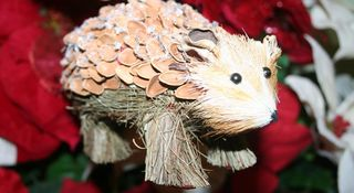 Hedgie orn2