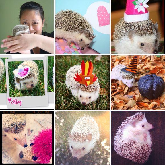 Abbey the Hedgehog